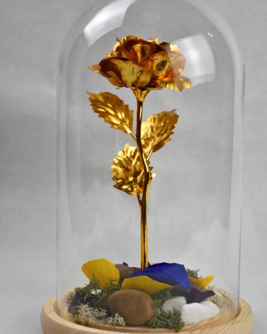 !Golden Beauty