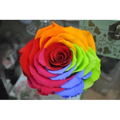 Trandafiri Criogenati Rainbow XXL