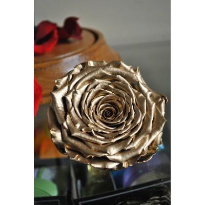 Trandafir Criogenat XXL Gold