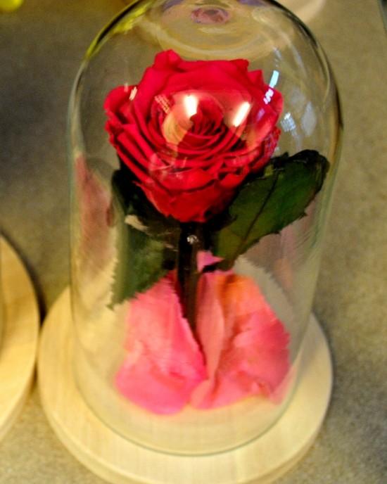 Valentine's Petit Rose